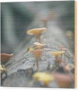 Mushrooms In The Trunk Wood Print
