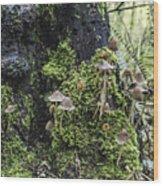 Mushroom Colony Wood Print