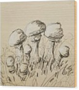 Mushrooms On Toned Paper With Charcoal Wood Print