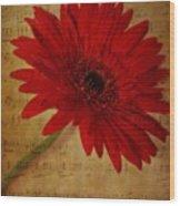 Musical Gerbera Wood Print