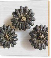 Musk Mallow Seeds Wood Print