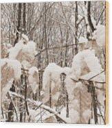 Muskoka Winter 6 Wood Print