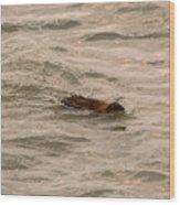 Muskrat In Lake Wood Print