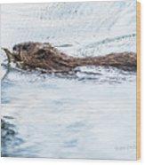 Muskrat Spring Swim Wood Print