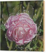 Must Have Been The Roses Wood Print