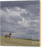 Mustang And Stormy Sky Wood Print