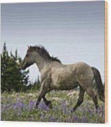 Mustang Running 2 Wood Print