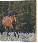 Mustang Stallion And Lupines Wood Print