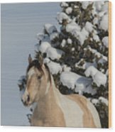Mustang Winter Wood Print