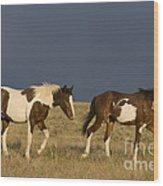 Mustangs In Nevada Wood Print