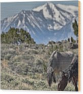 Mustangs In The Sierra Nevada Mountains Wood Print