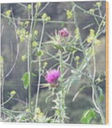 Mustard And Thistle Wood Print