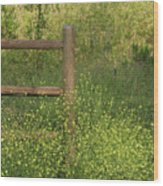 Mustard Grass And Fence At Entrance To Peters Canyon Wood Print