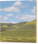 Mustard On Nipomo Hills Wood Print