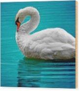 Mute Swan 4 Wood Print