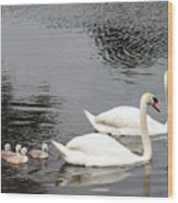 Mute Swan Family Day Two Wood Print