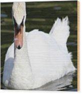 Mute Swan Feathers Of Lake Junaluska North Carolina  Wood Print
