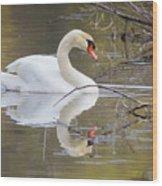 Mute Swan Glide II Wood Print