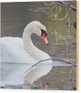 Mute Swan I Wood Print