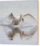 Mute Swan Landing I Wood Print