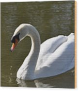 Mute Swan On Rolleston Pond Wood Print