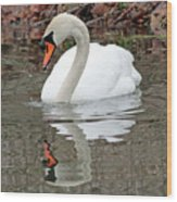 Mute Swan Reflecting Wood Print