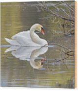 Mute Swan Reflection I Wood Print