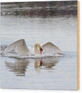 Mute Swan Swim Wood Print