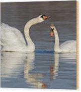 Mute Swans Drinking Wood Print