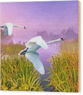 Mute Swans Over Marshes Wood Print