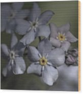 Muted Forget Me Not  Wood Print
