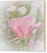 Muted Rose  Wood Print