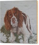 Muttley-the Best Springer Spaniel Wood Print