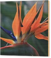 My Bird Of Paradise Wood Print by Valia Bradshaw