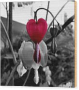 My Bleeding Heart Wood Print