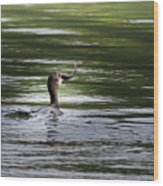 Cormorant - My Catch For The Day Wood Print