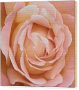 My Daily Rose Wood Print