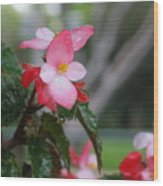 My English Garden 8 Wood Print