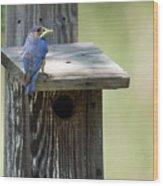 My First Bluebird Wood Print