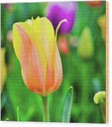 My First Tulip Wood Print