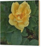 My First Yellow Rose Wood Print