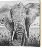 My Friend The Elephant II Wood Print
