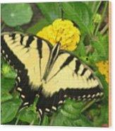 My Garden Visitor Wood Print