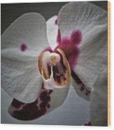 My Growling Dragon Orchid. Wood Print