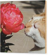 My Kitty In Love With A Peony Wood Print