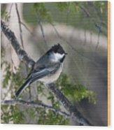 My Little Chickadee II Wood Print