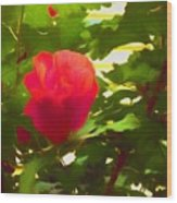 My Love Is Like  A Red Red Rose Of Sharon Wood Print