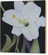 My White Lily Wood Print