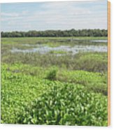 Myakka River And Marshes Wood Print