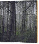 Myakka Woods Wood Print